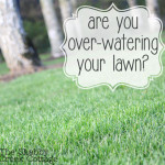 10 tips to water your lawn properly