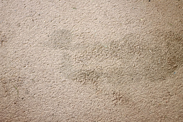 Removing Spots From Carpet Floor Matttroy