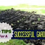 tips for a successful garden