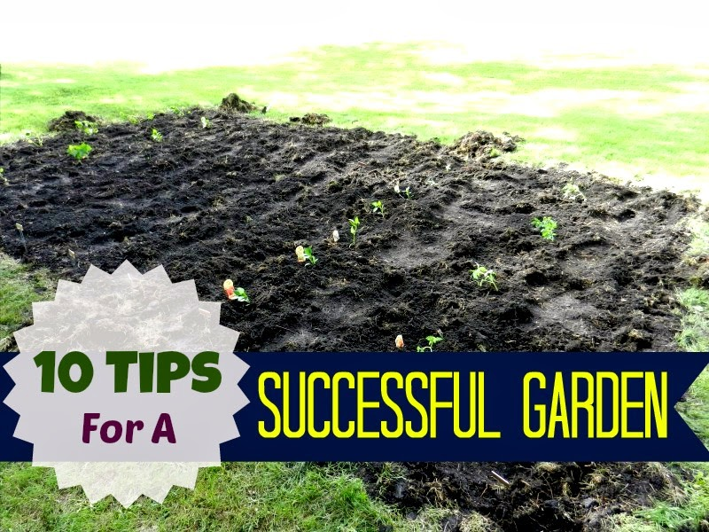 10 Tips For A Successful Garden