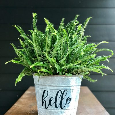Metal Bucket Planter with Farmhouse Charm